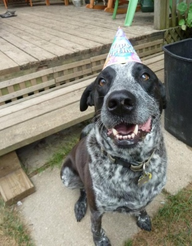 Unfortunately, I didn't throw myself a drumiversary party this month and put hats on the dogs.  This pic is from Alex's 7th birthday last year.  (Yes, I do silly things to celebrate my dogs birthdays.  It's dorky but I'm not ashamed.)